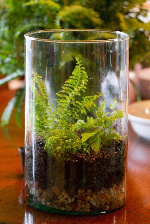 diy terrarium, gardening, home decor, terrarium