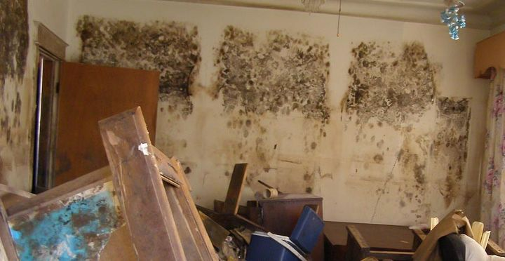 6 known health risks from indoor mold exposure, cleaning tips, home maintenance repairs