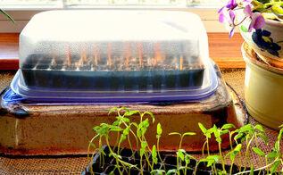 diy space saving seed starter, gardening