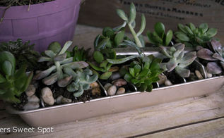 succulent ice cube tray, gardening, repurposing upcycling, succulents