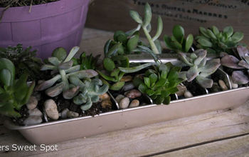 Succulent Ice Cube Tray