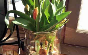 How to Force Tulips- or at Least Make People Think You Did