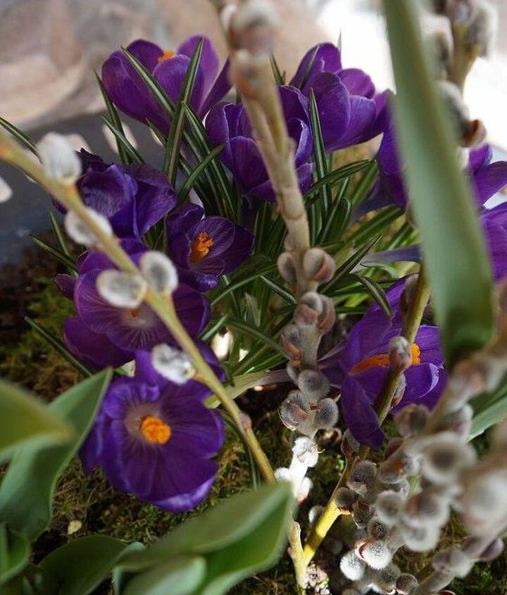 plant a spring blooming birdbath, container gardening, flowers, gardening