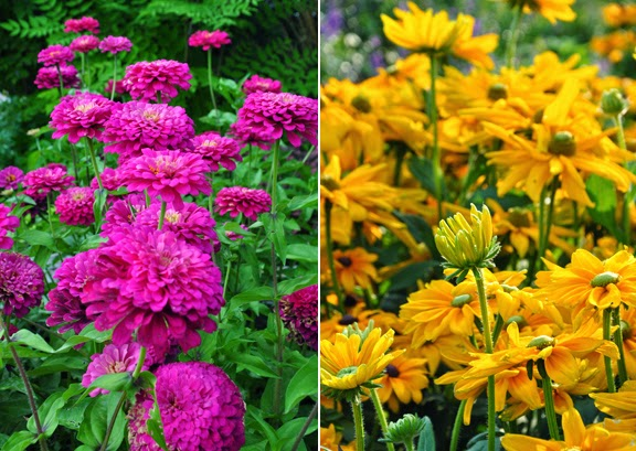 Zinnas on the left and Rudbeckia on the right