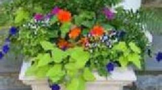 , cluster your plants into containers for a more pulled together and fuller look instead of multiple single pots also is less care for your plants than separate pots if you use white pots it will pick up your white trim