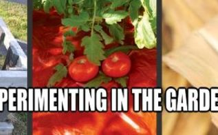 a few new experiments for this summer s garden, container gardening, gardening, homesteading