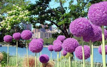 """Give Your Garden the """"Wow"""" Factor With These 5 Extraordinary Flowers"""