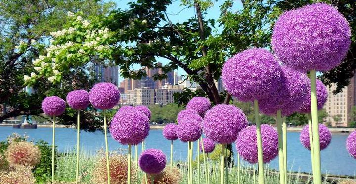 give your garden the wow factor with these 5 extraordinary flowers, flowers, gardening