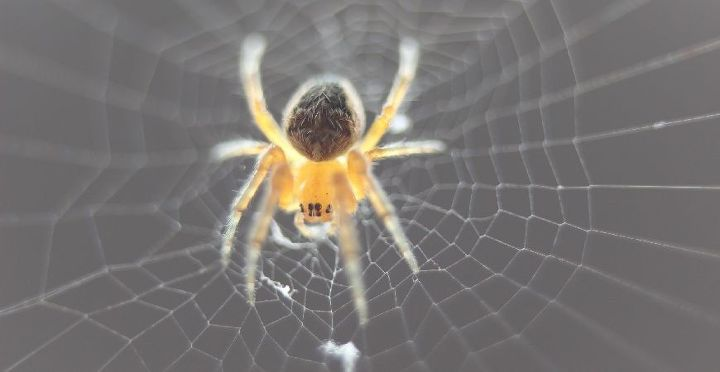 7 fun facts about spiders, pest control