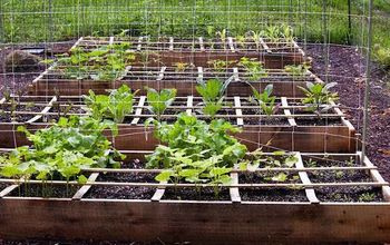 See Our Top Tips to Liven up Your Soil and Grow Your Best Veggies Yet!