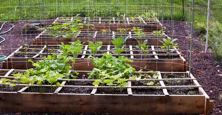 see our top tips to liven up your soil and grow your best veggies yet, gardening, homesteading