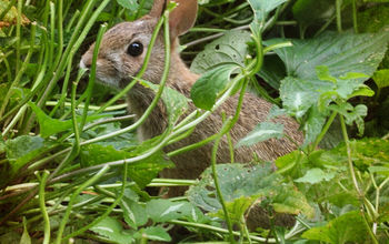 Bunny-Proof Plants