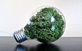 grow decorative moss and bring new life to your home s look, container gardening, crafts, gardening, home decor