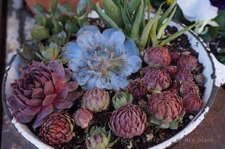 don t toss those old pots and pans turn them into succulent planters, container gardening, flowers, gardening, repurposing upcycling, succulents