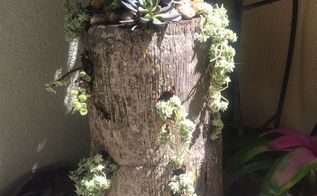 palm tree stumps repurposed, container gardening, gardening, repurposing upcycling, succulents