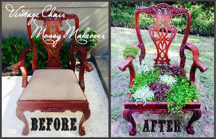 diy vintage chair gets a mossy makeover, container gardening, flowers, gardening, painted furniture, repurposing upcycling, succulents