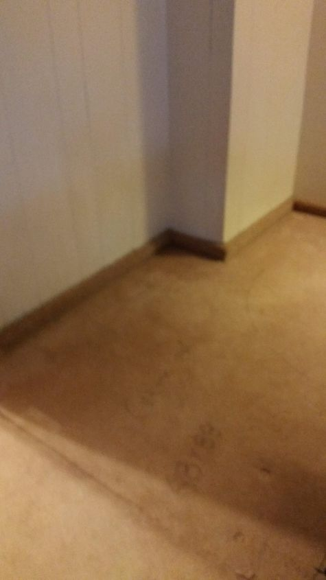How To Best Approach This Wood Floor Found Under Carpet Hometalk