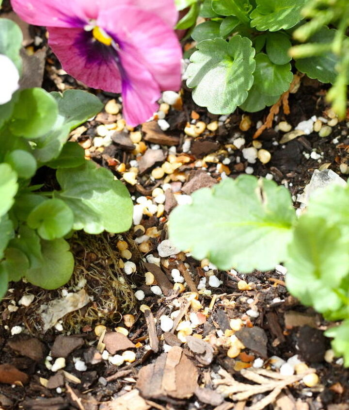 how to keep squirrels out of planters, flowers, gardening, go green, pest control, pets animals