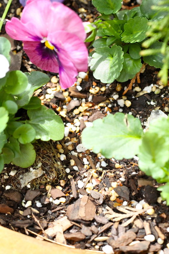 How to keep squirrels out of planters hometalk - How to keep squirrels away from garden ...