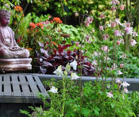 jacquie s amazing spring garden, flowers, gardening, perennial
