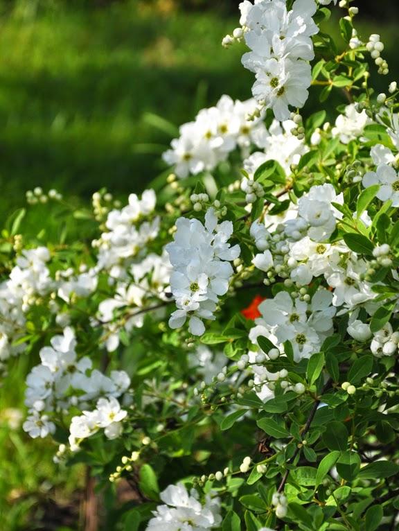 Using perennials in your spring garden hometalk jacquie s amazing spring garden flowers gardening perennial mightylinksfo