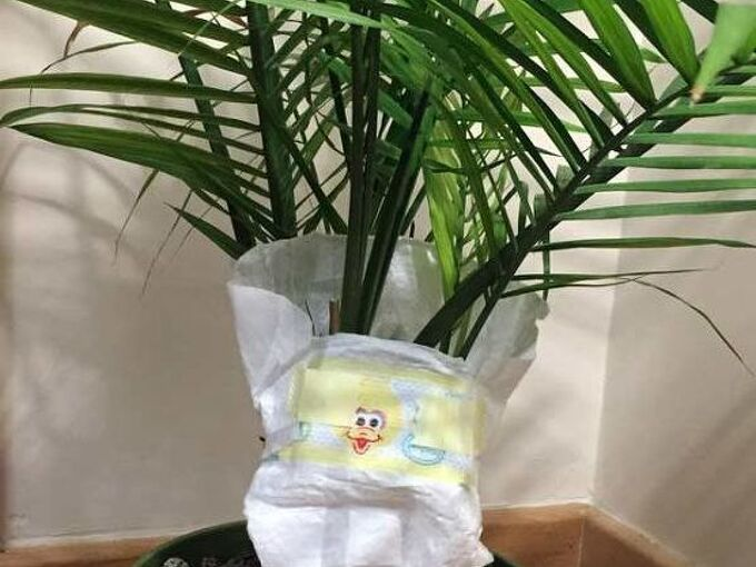 put your baby plants in diapers, gardening, home decor, repurposing upcycling