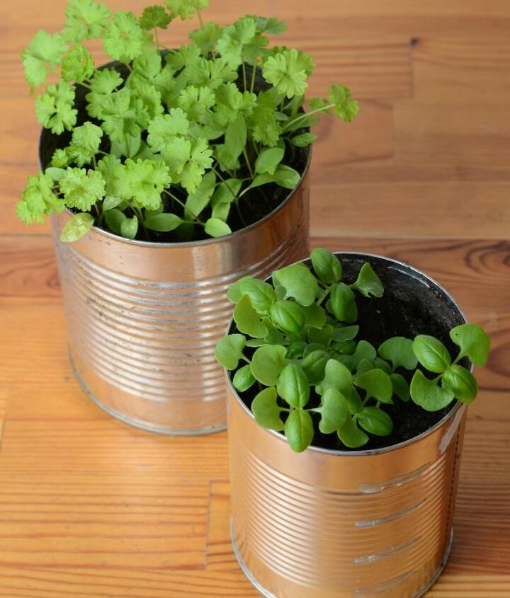 houseplants a room by room guide, container gardening, flowers, gardening, home decor