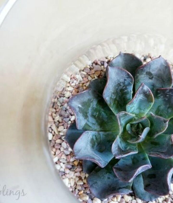 creative succulent terrarium, container gardening, flowers, gardening, home decor, succulents, terrarium