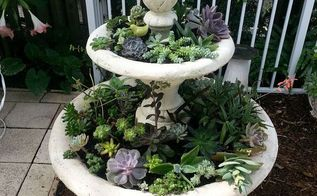 from fountain to planter, container gardening, gardening, ponds water features, repurposing upcycling, succulents, Second planting of fill in succulents