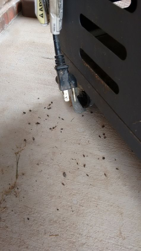 ID Of Tiny Droppings Behind BBQ | Hometalk