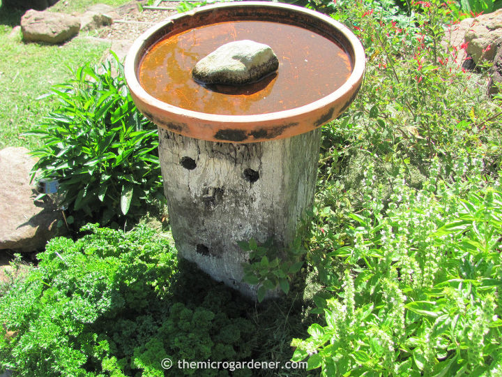 A shallow, safe bee bath with landing zone