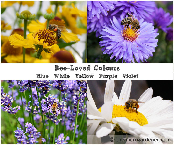 These colours are especially favoured by bees
