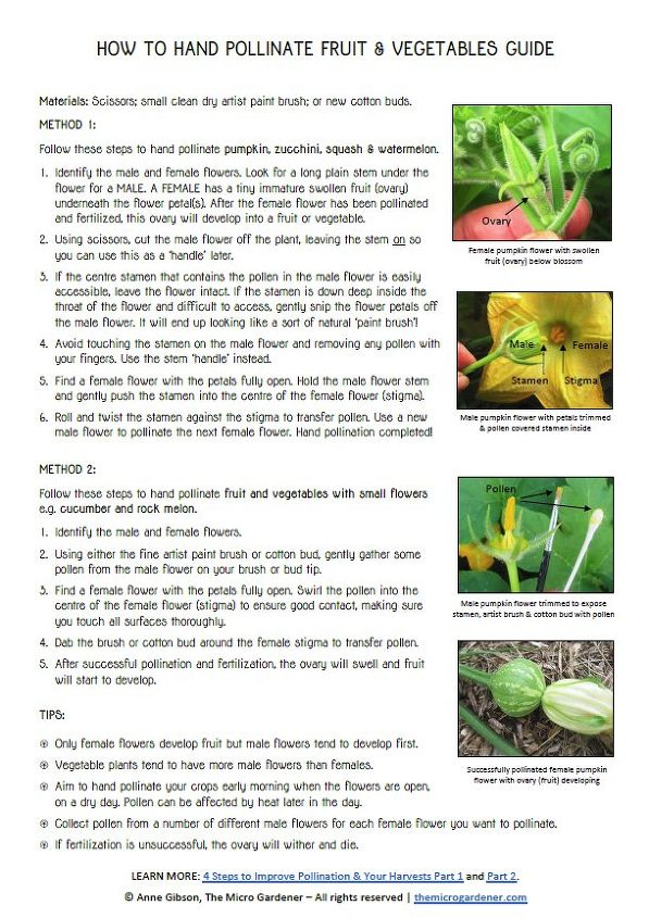 Step-by-Step Guide to Pollinating by Hand