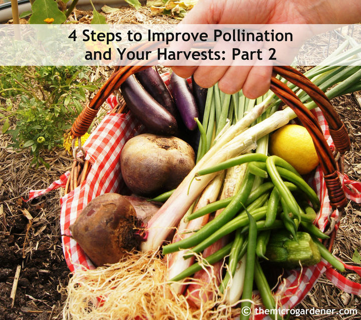 bee friendly gardens insect hotels hand pollinating tips, gardening, homesteading, repurposing upcycling