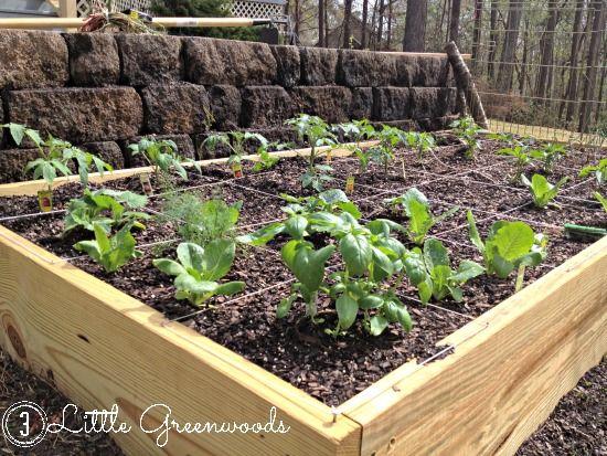 Build Your Own DIY Container Garden | Hometalk