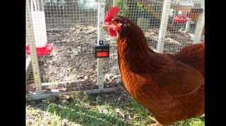, This shows how one solar product keeps night time predators away from chickens or even pets has a video of how GuardenerTM 2 0 Deer Repellent works