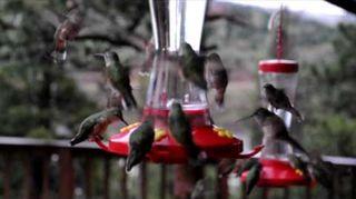 , A few birds getting a drink