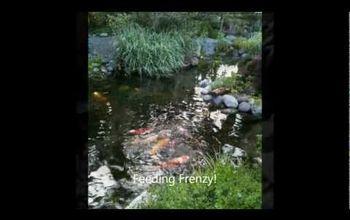 outdoor living moonlight pond tour sneak peek video, flowers, gardening, landscape, outdoor living, ponds water features, Moonlight Pond Tour Sneak Peek Video