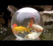fish bowl on your pond cool idea, pets animals, ponds water features