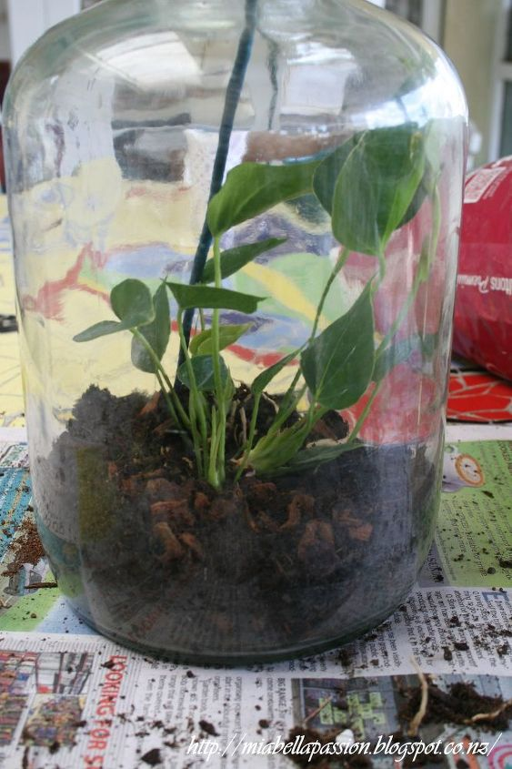 how to make a diy bottle terrarium, container gardening, gardening, home decor, how to, terrarium