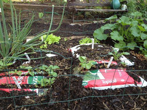 Plastic bags growing greens.