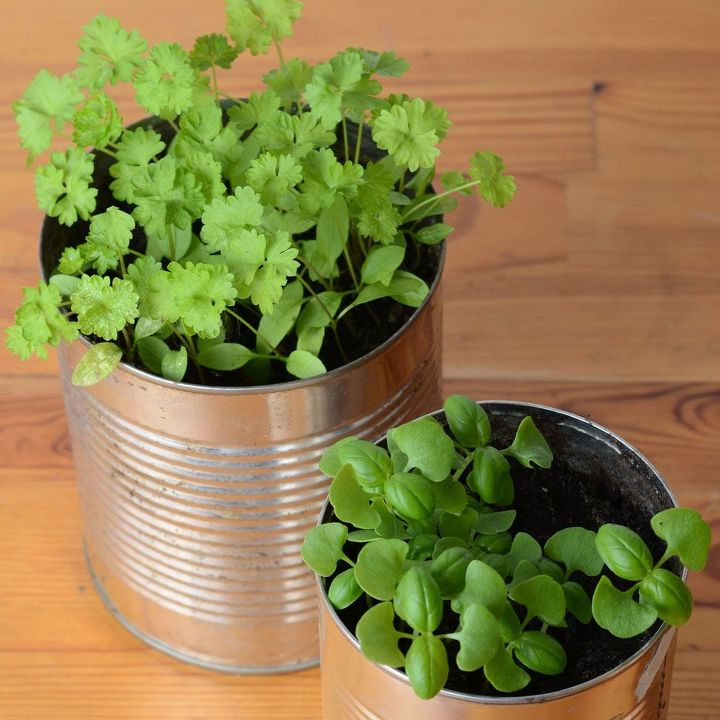 grow herbs for recipe ingredients