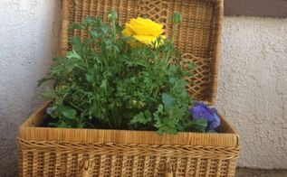 picnic basket flower pot, container gardening, flowers, gardening, repurposing upcycling
