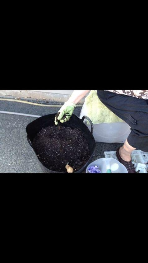 Good qualtiy potting soil is necessary.