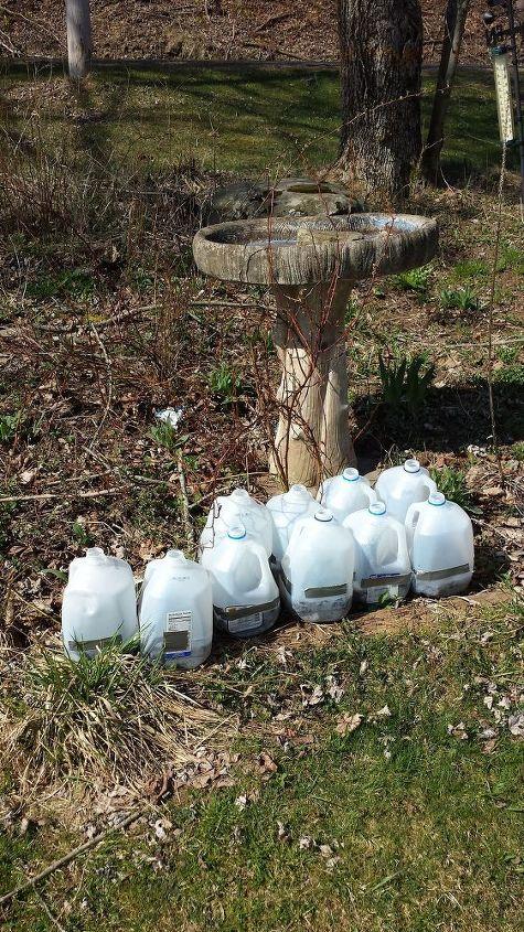 repurposed milk jug greenhouses, gardening, how to, repurposing upcycling