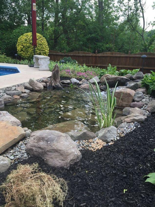 Backyard Fish Pond Installation | Hometalk