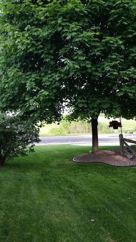 q lilac bush has grown wild, flowers, gardening