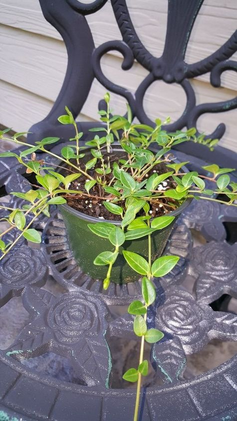 q plant id, container gardening, gardening