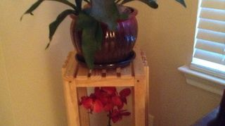 , Started out small this is the third pot my husband made me a stand especially for it