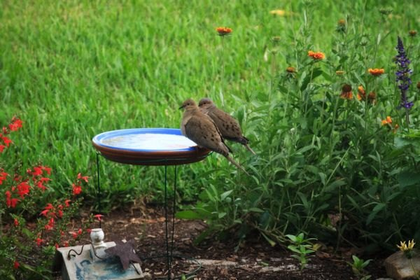 Diy Tomato Cage Bird Bath Hometalk